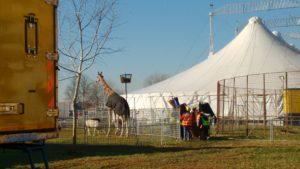 giraffa-circo-orfei-cavallaccio