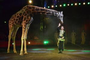 nelly-orfei-giraffa