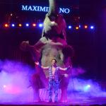 orfei-circus-maximiliano-elephamt