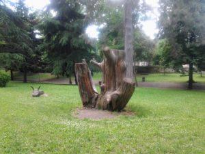boschetto albero 1 2013-05-19 12.30.23