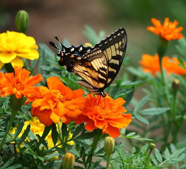 farfalla fiori