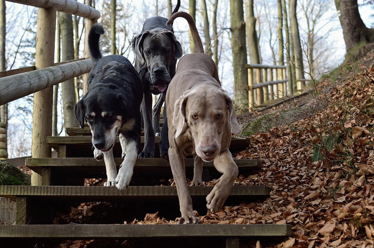 animali cani