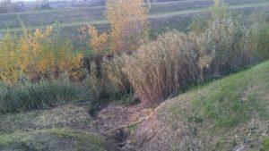 trekking urbano firenze percorso sentiero greve arno (1)