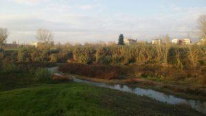 La Greve nel nostro quartiere mostra ancora sulle sue sponde la naturale vegetazione palustre