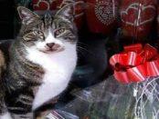 romeo gatto isolotto 2018 foto prima arrivata copertina