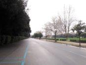 cascine (1)