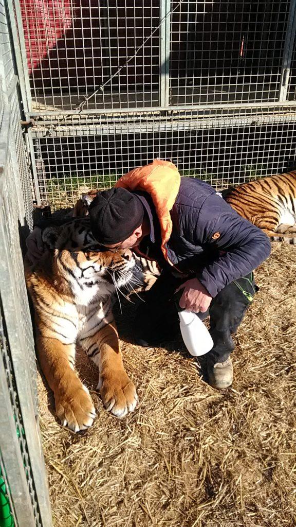 Circo Medrano addestratore Giordano Caveagna e le sue tigri (1)