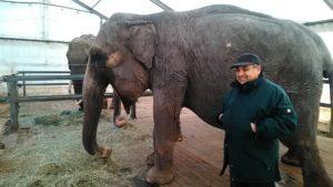 Circo Medrano davio Casartelli e i suoi elefanti (3)