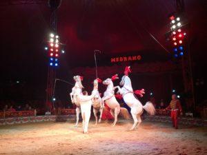 Circo Medrano Firenze Isolotto