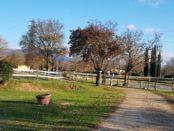centro equestre fiorentino