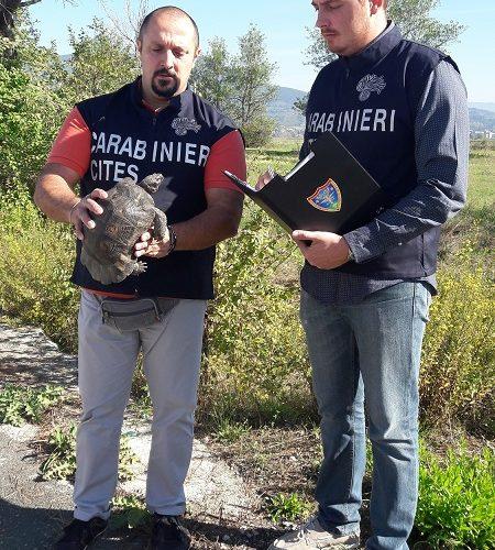 tartaruga sarda salvata carabinieri forestali badia a settimo