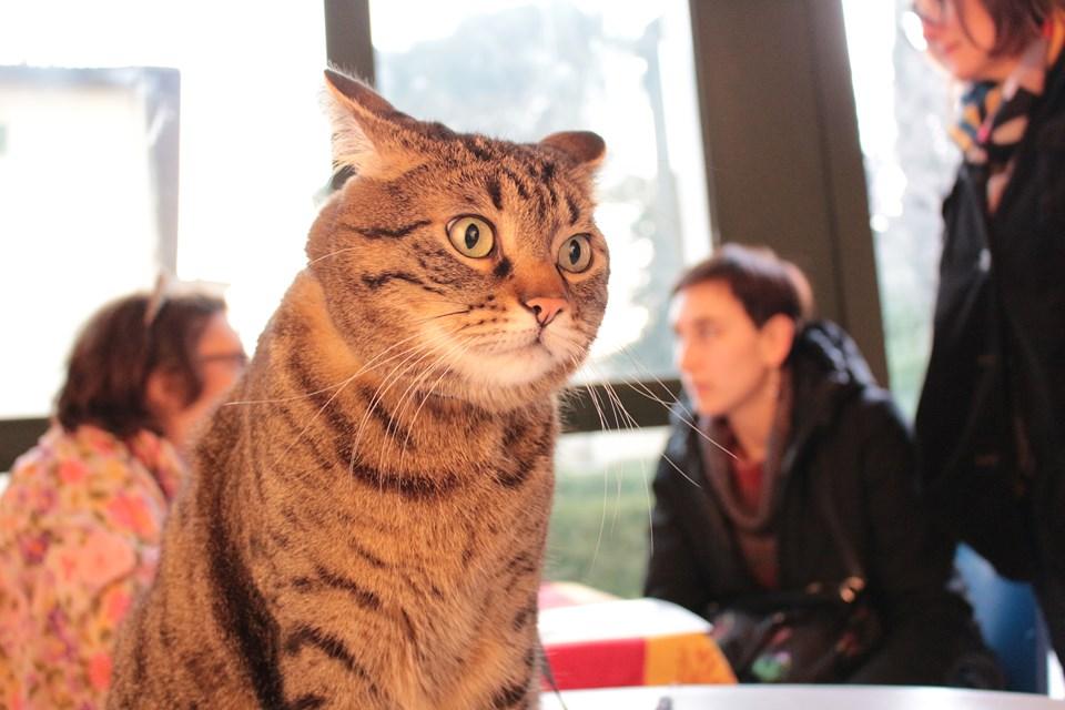 festa del gatto 3