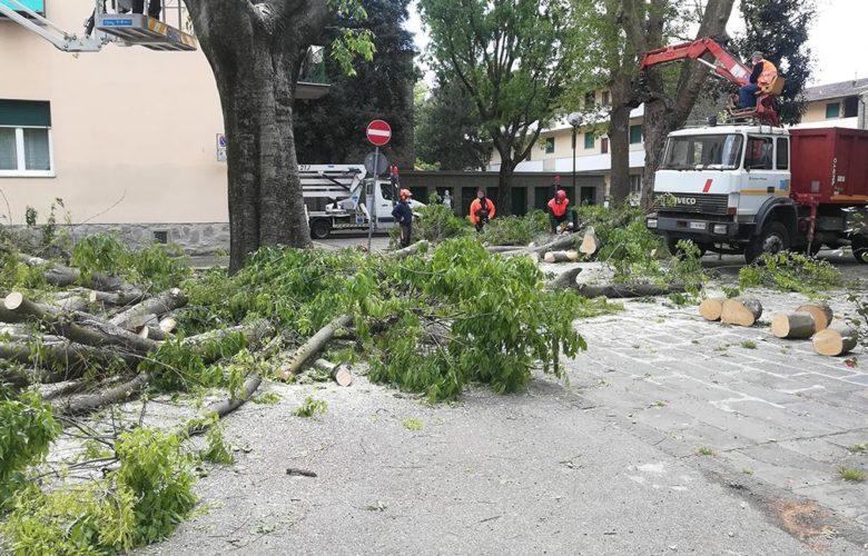 Gli alberi durante l'abbattimento - foto Italia Nostra