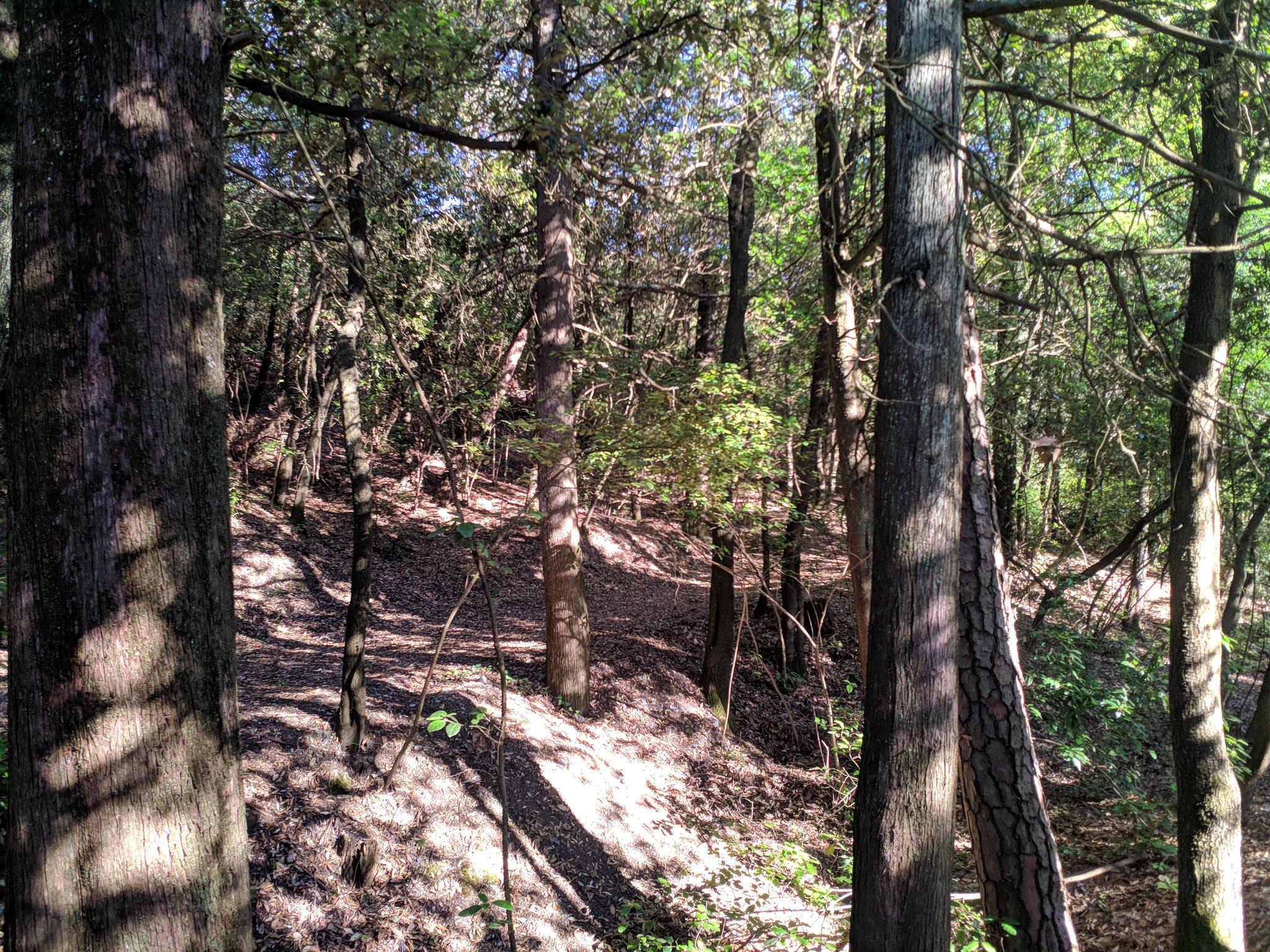 alcune parti risultano poco manutenute e la boscaglia sembra lasciata a se stessa