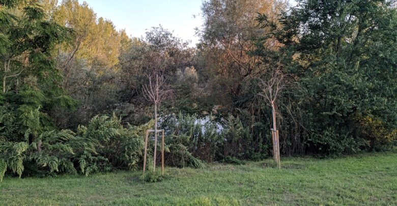 Parco dell'Argingrosso, il laghetto tra i cespugli