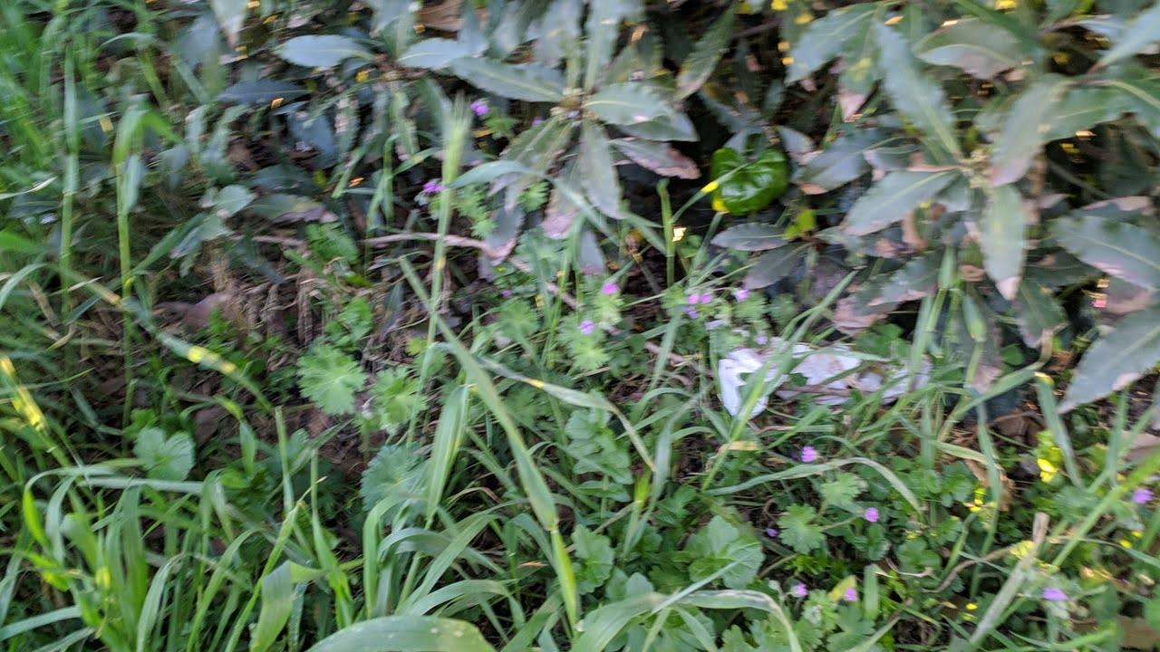 Residui di carta stagnola, probabilmente utilizzata per contenere droga. Il parco ne ha in ogni angolo