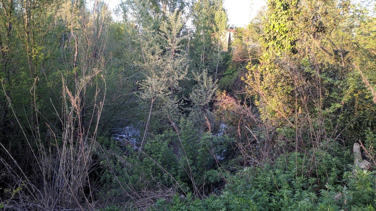 La vegetazione intricata e sporca del laghetto, utilizzato come terra di nessuno da chi deve prostituirsi, drogarsi o spacciare