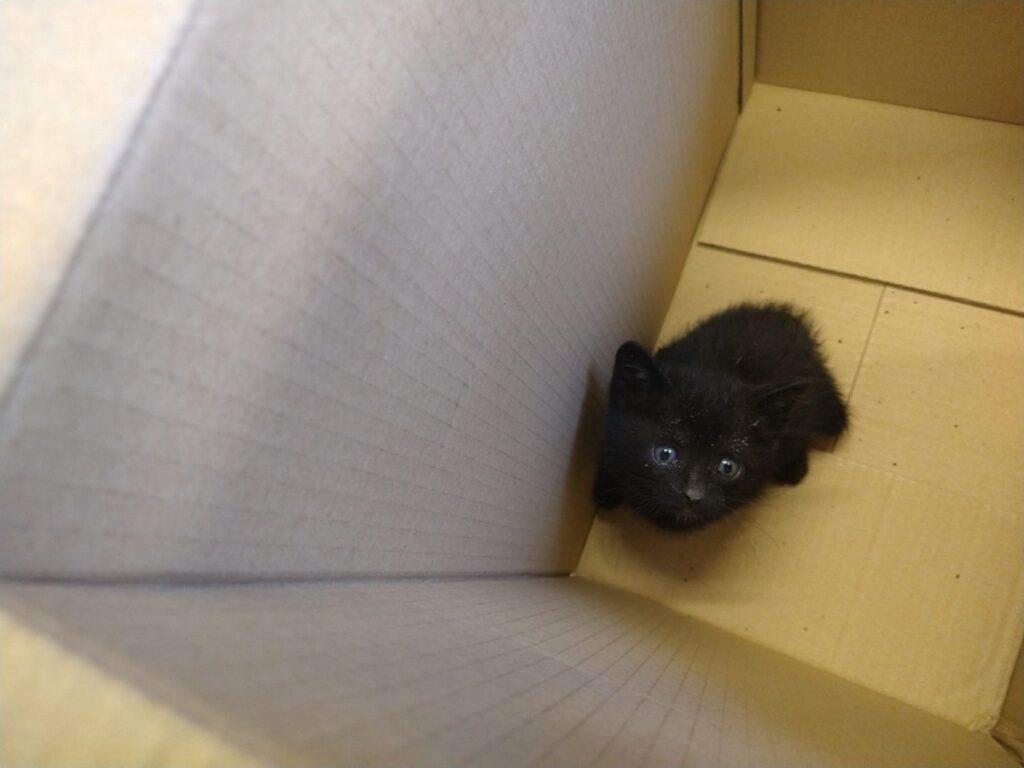 salvataggio gattino via bronzino vinaio la piccola botte vigili del fuoco (6)