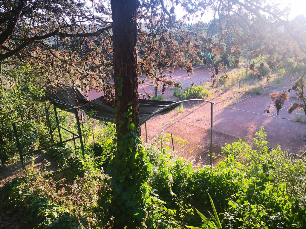Campo da tennis San Quirichino 3